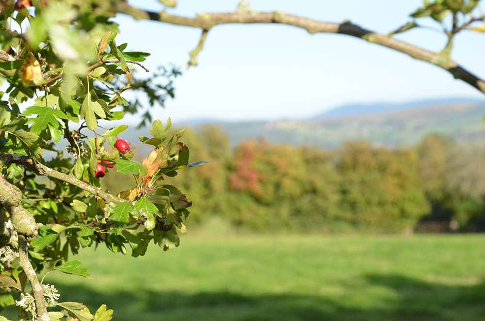 Wicklow Mountains viewed through a Hawthorn Branch